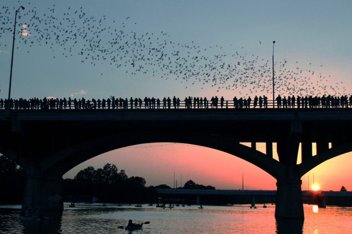 Austin Bats of Congress Bridge