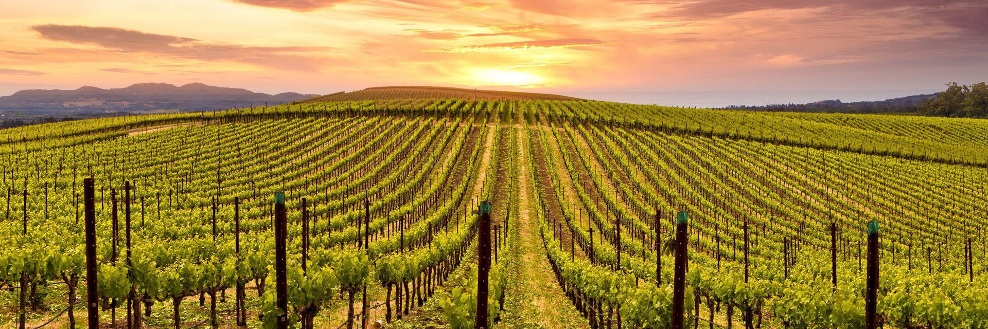 Archer's Favorite Wine Country Wineries: Red Wine