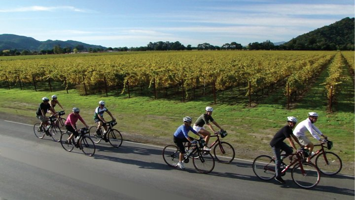 Group of bicyclists riding on a road through Napa Valley