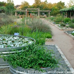 Variety of flowers and plants at Lady Bird Johnson Wildflower Center}
