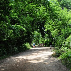 A runner on a path with trees on the side of a road