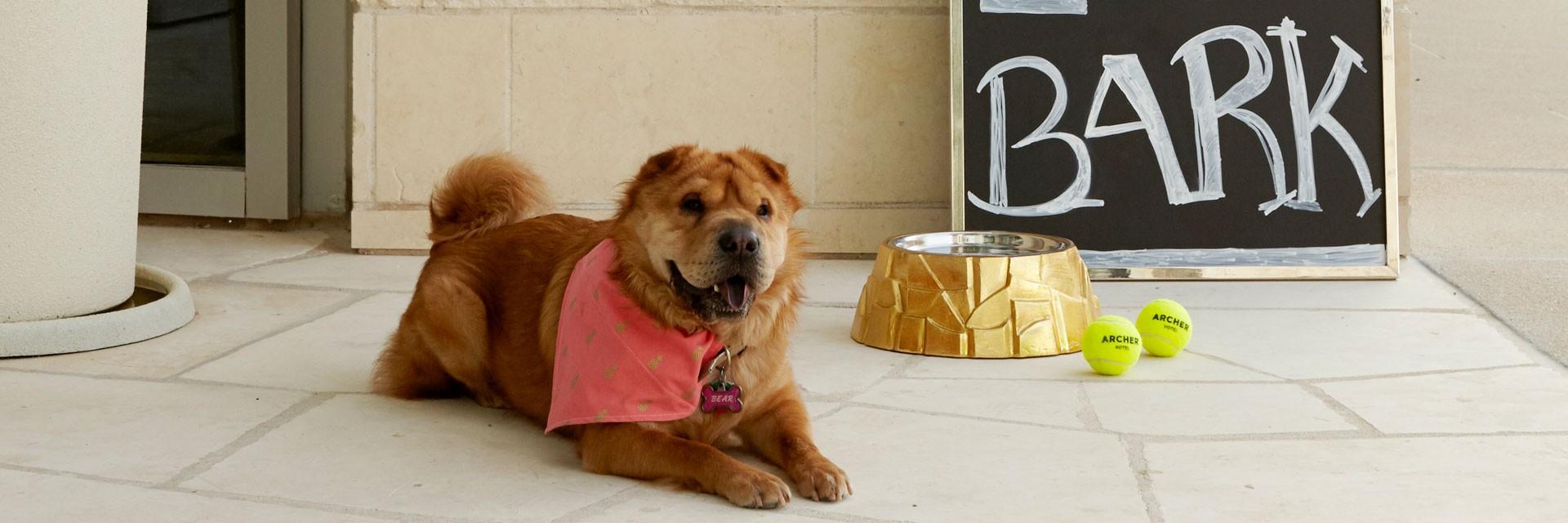 Archer Hotel Austin - Dog with food bowl