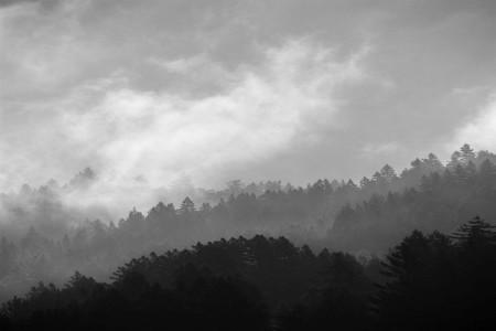 Clearing Fog, 1996 — Photograph by Robert Buelteman