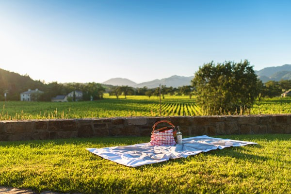 Picnic Basket on the blanket with view on grape vines